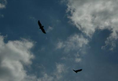 hawks1.jpg