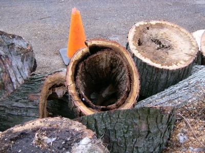 logs2.jpg