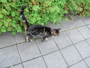 reykcat1