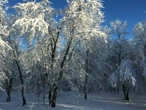 tg-snow4