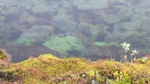 thingalgae1
