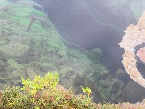 thingalgae5