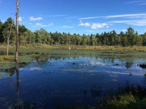 wendswamp1
