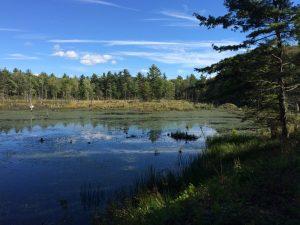wendswamp2
