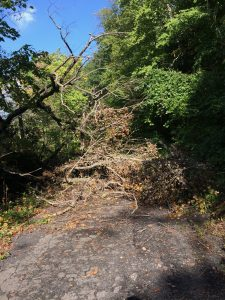 Road surface with dead tree branches lying across it, and living trees above and to the sides.