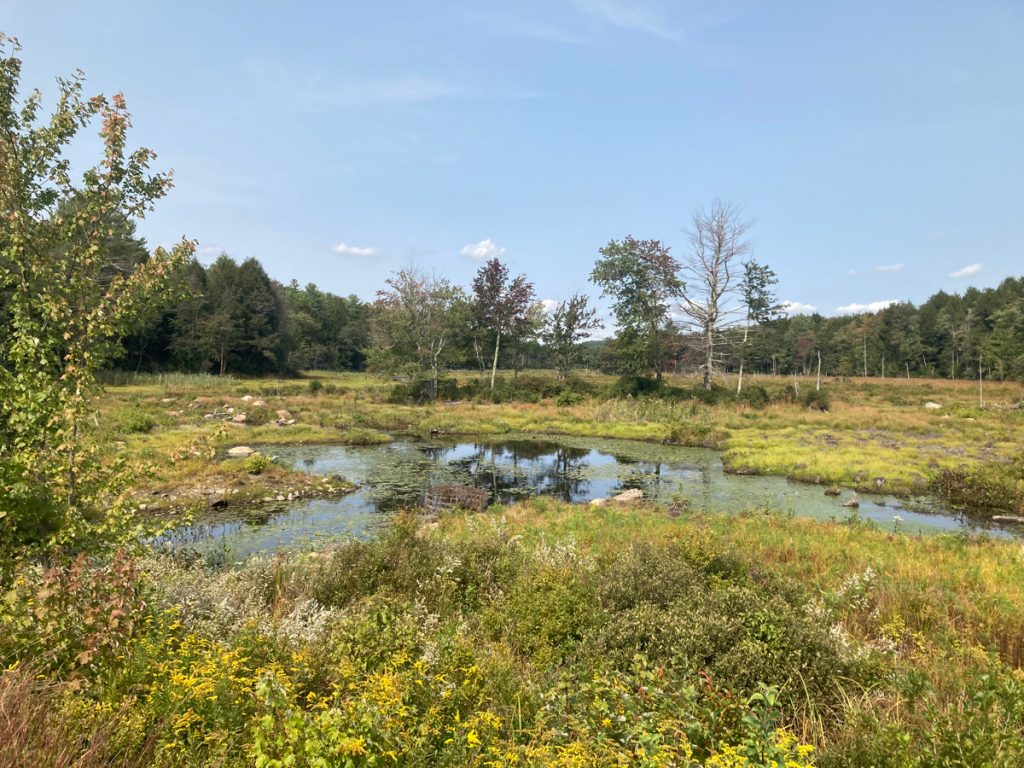 Small marsh area, with grasses and brush around.
