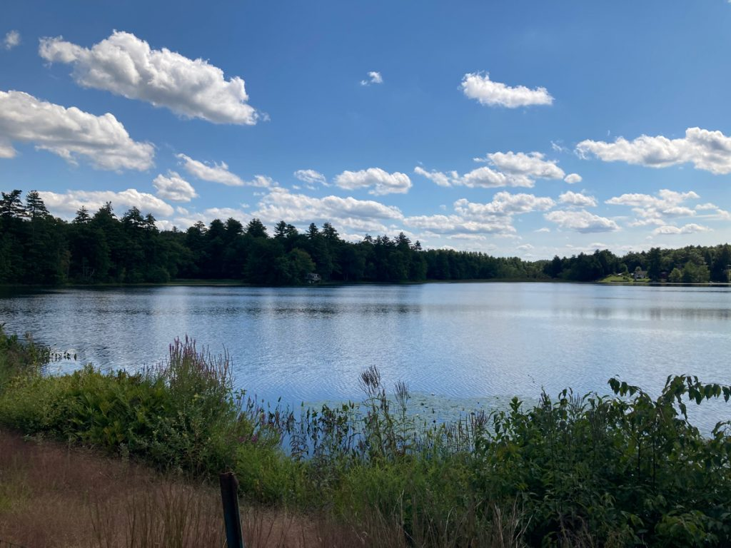 Lake with weeds in front of it, trees in the background and several clouds in the blue sky