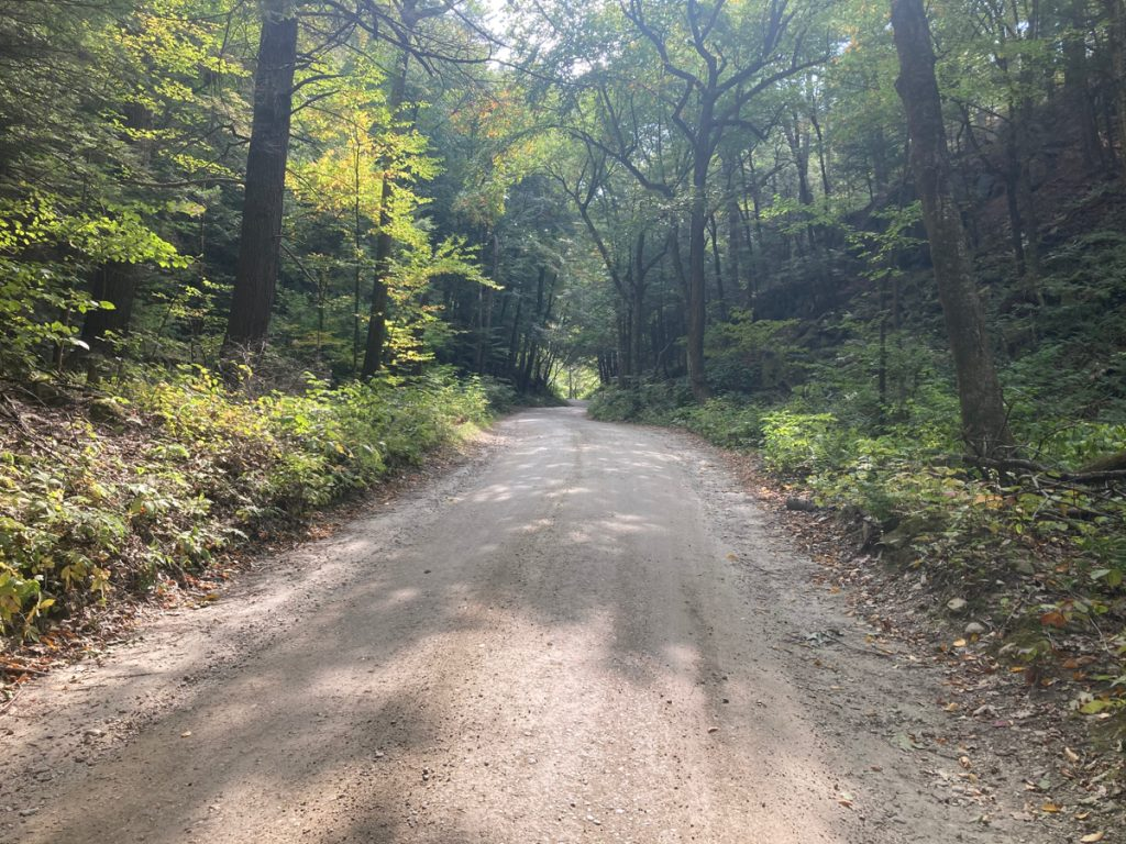 Looking along a dirt road, with woods on either side, and some patches of sunlight falling on the road.