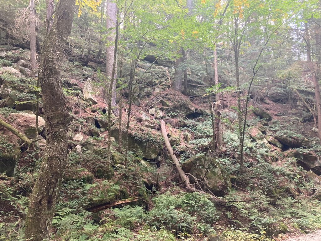 Wooded hillside with large rocks on the slope, as well as ferns and other undergrowth among many tree trunks.