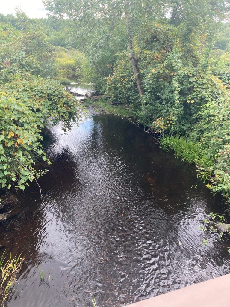 Creek with vegetation on either side, seen from up on a bridge.
