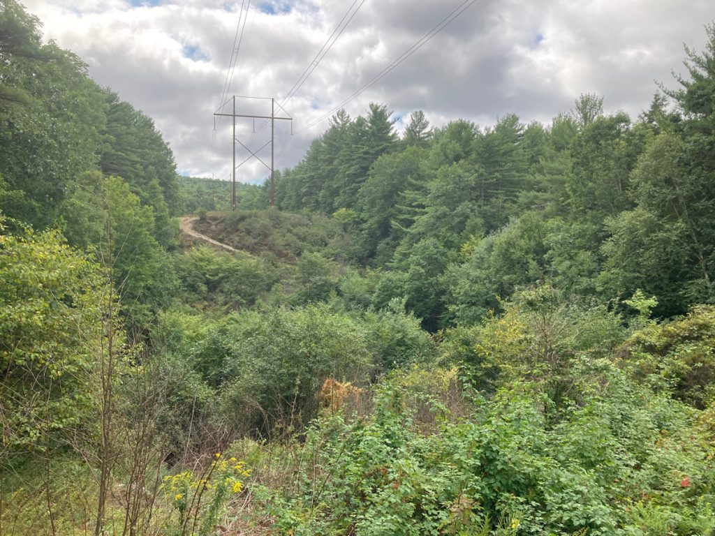 Hilly area with lost of brush and trees, and electric lines on towers heading over a hill in the distance.