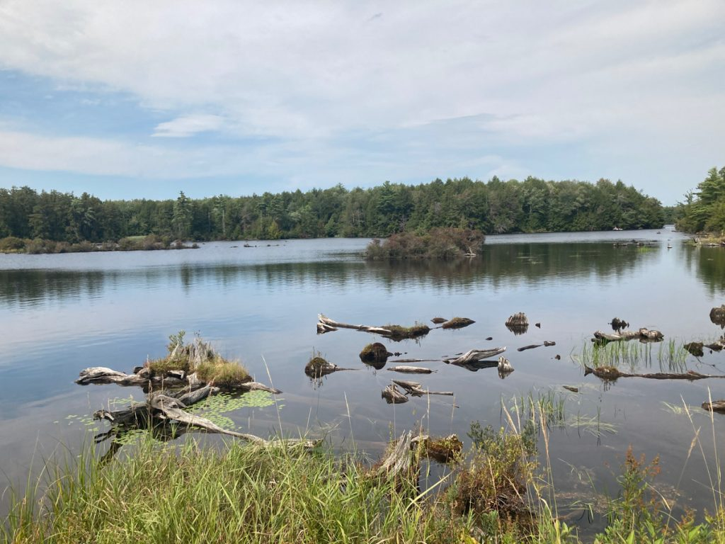 Body of water with some grass in foreground, and some logs in the shallow part of the water.  Trees can be seen on distant shore.