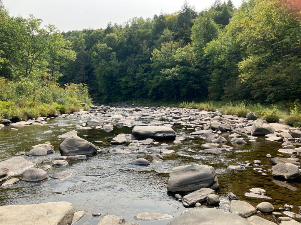 Looking downriver, with a lot of rocks in the water, and trees on either side.