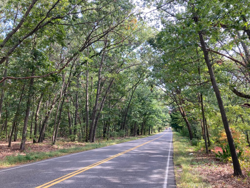 Looking along road surface, with trees on both sides that lean in and form a canopy over the road.