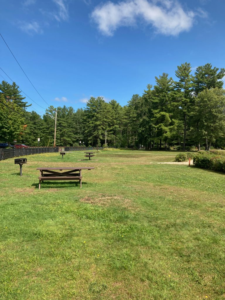 Grassy area withe a few picnic tables and charcoal grills.  Lots of trees in the background.