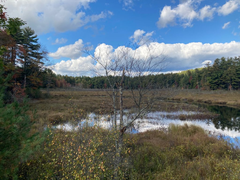 Marsh with much tall grass among the watery areas.  There are some trees on the left, and a bare tree i the foreground, with a line of evergreen trees in the distance, and blue, cloudy sky.