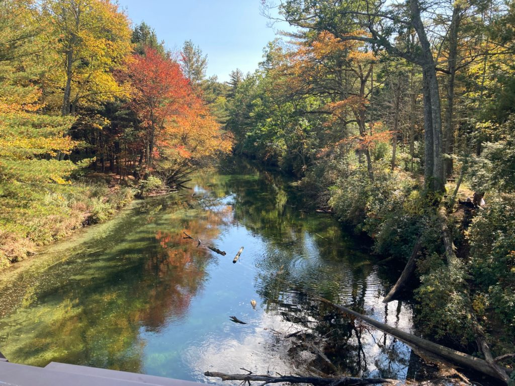 Looking along calm river with trees on both sides, and a couple of fallen branches or trunks in the water.  Some trees are showing orange color of autumn.